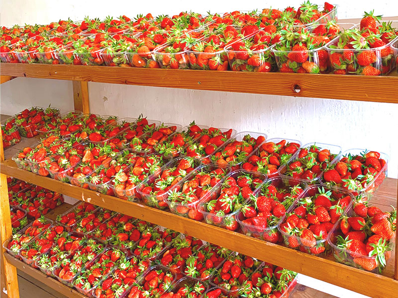 Sulzmann | Erntefrische Erdbeeren | Mieze Schindler
